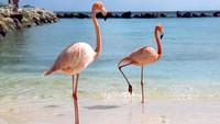 Viral Flamingo Berantem Sampai Berdarah-darah, Padahal Lagi Menyusui