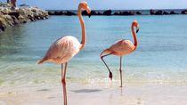 Saat Pesawat Tidak Bisa Terbang Karena... Burung Flamingo