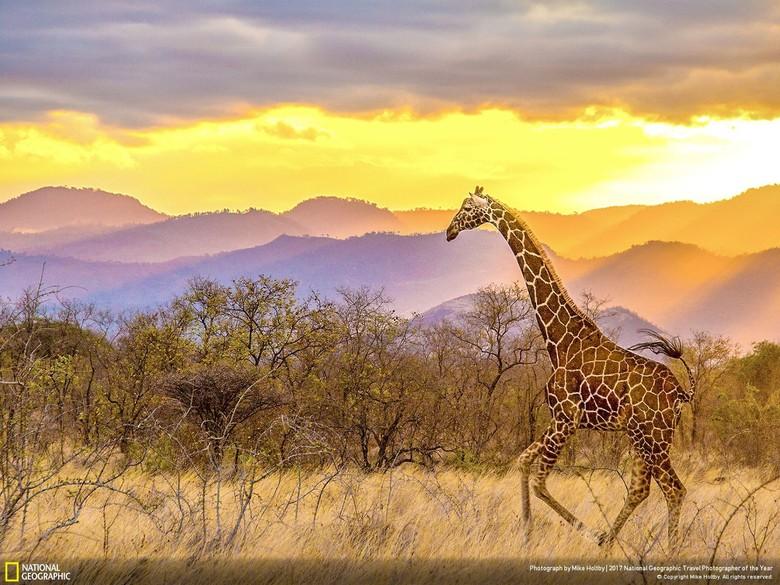 830 Gambar Hewan Beserta Pemandangan Terbaik