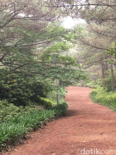 Ada Megawati Garden di Jeju Korsel