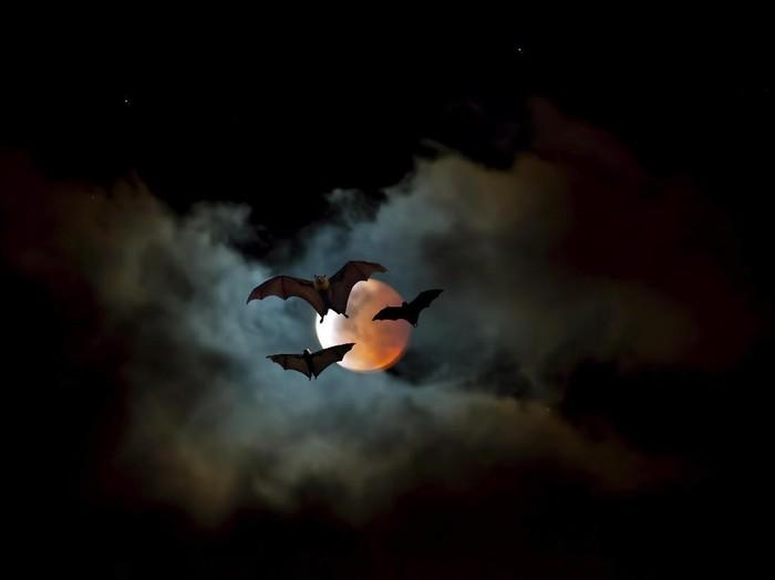 Ada spesies kelelawar vampir yang menyukai darah manusia (Foto: Thinkstock)