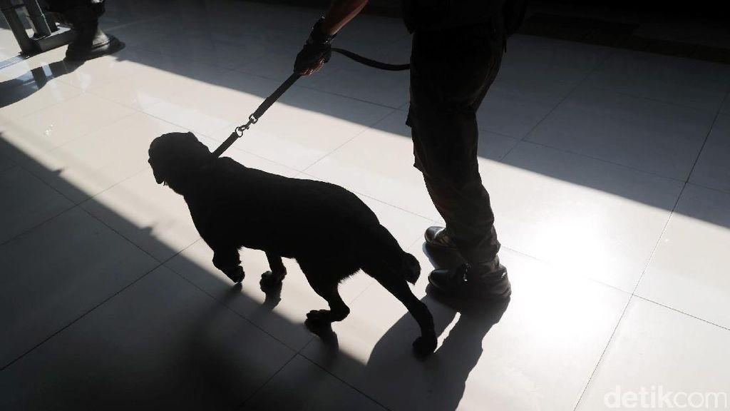 6 Anjing Pelacak Disiagakan Daop Bandung Selama Nataru
