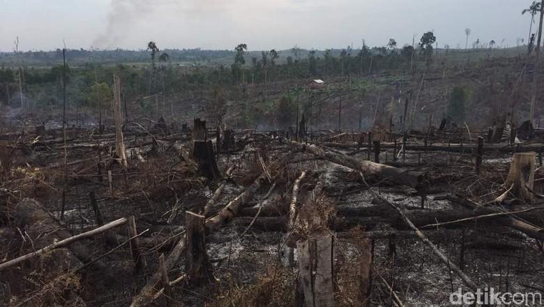 Satgas Karhutla Temukan Titik Api di Kawasan Taman Nasional Riau