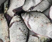 Resep Pembaca : Ikan Gurame Krispi Saus Asam Pedas