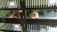Jasa Penitipan Kucing