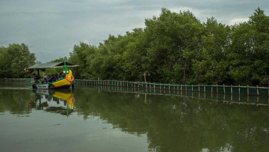 Bukan Cuma Mangga, Indramayu Juga Punya Hutan Mangrove