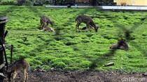 Gerombolan Pemburu Rusa di Taman Nasional Ujung Kulon Dibekuk