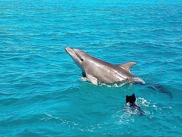 Lumba-lumba berenang bareng anjing di Bahama