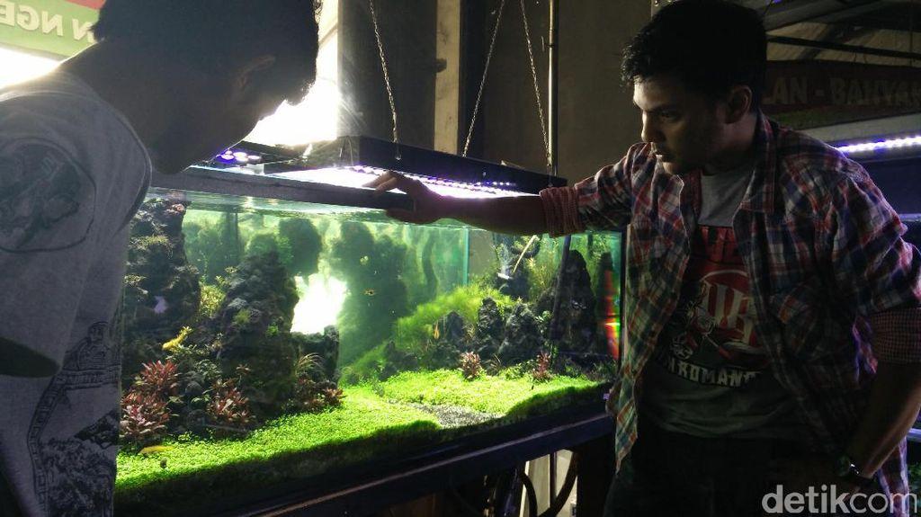 Jernihnya Bisnis Kebun Akuarium Beromzet Puluhan Juta Rupiah