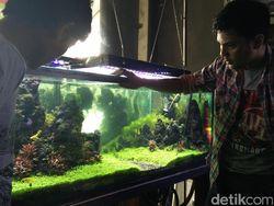 Jernihnya Bisnis 'Kebun Akuarium' Beromzet Puluhan Juta Rupiah