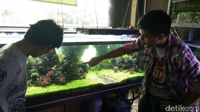 Toko Peralatan Aquascape Di Jogja - Aquascape