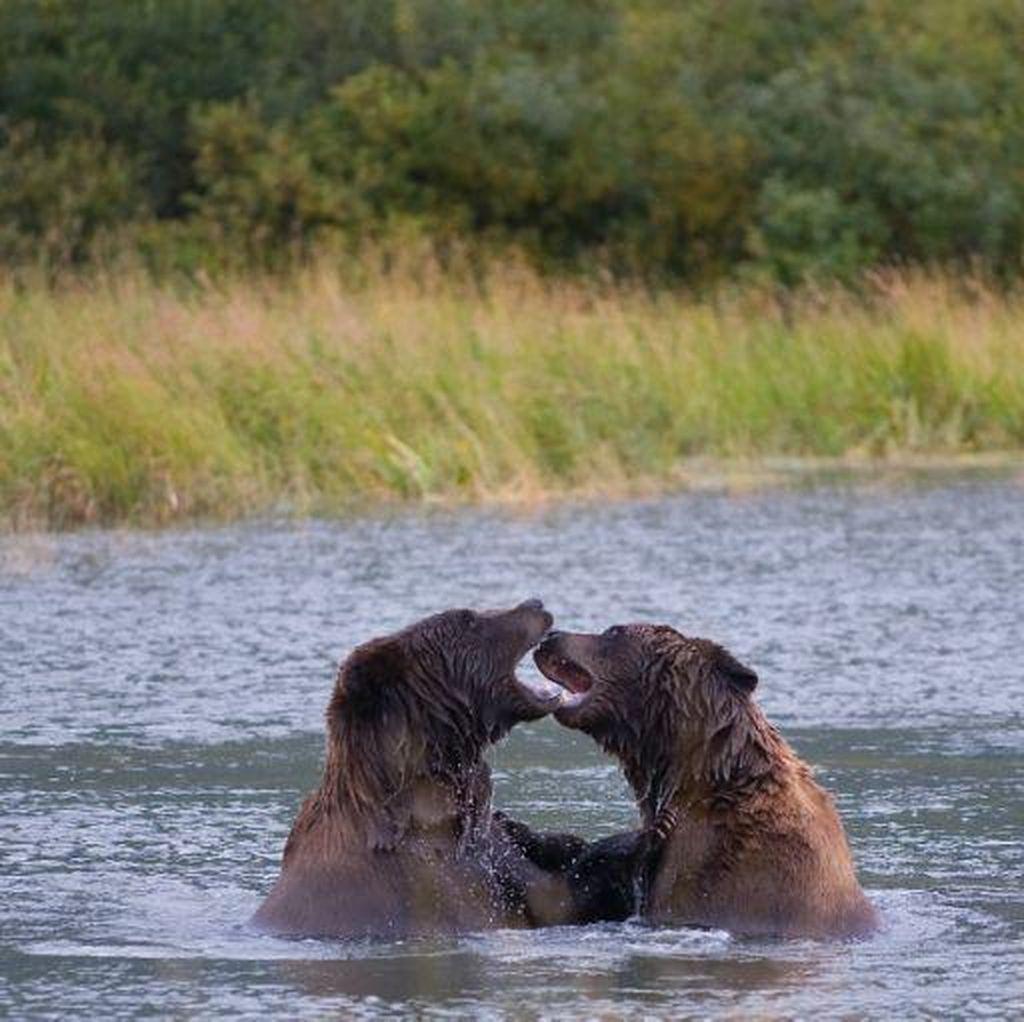 Mengenaskan! Dikira Beruang Liar, Seorang Pria Ditembak Mati Putranya