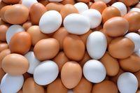 Kasihan! Driver Ojol Ini Tak Sengaja Jatuhkan Beberapa Peti Telur Ayam