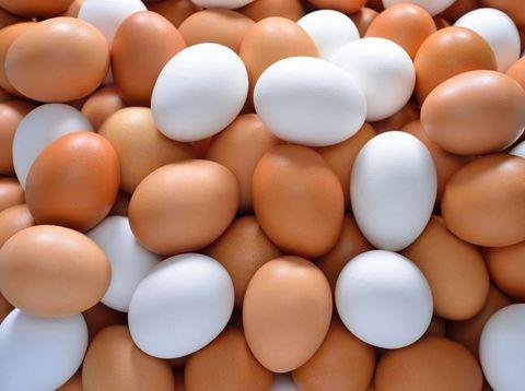 Telur ayam, makanan sumber protein tinggi paling murah