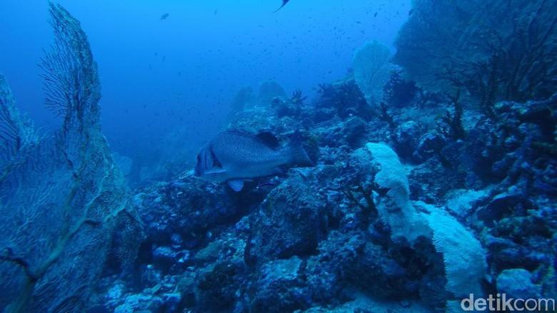 Foto: Pemandangan bawah laut Sabang: (Bonauli/detikTravel)