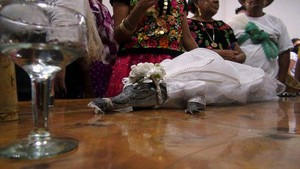 Cerita Pernikahan Aneh di Dunia: Dengan Buaya, Eiffel hingga Truk