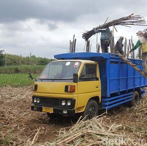 Petani Tolak Keras Rencana Impor Gula 200.000 Ton