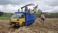 Gula Petani Bakal Dibeli Seharga Rp 11.200/Kg