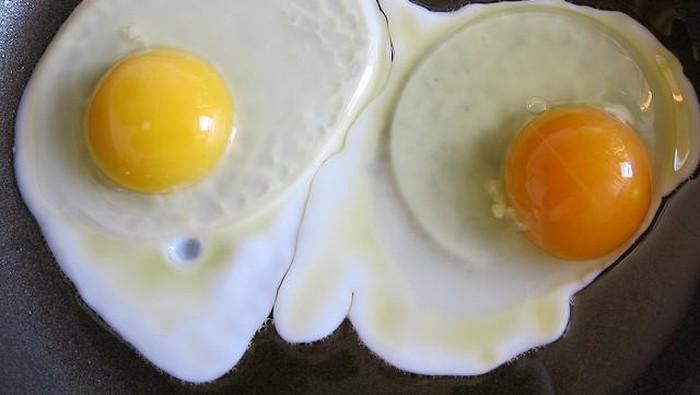 warna kuning telur berbeda-beda