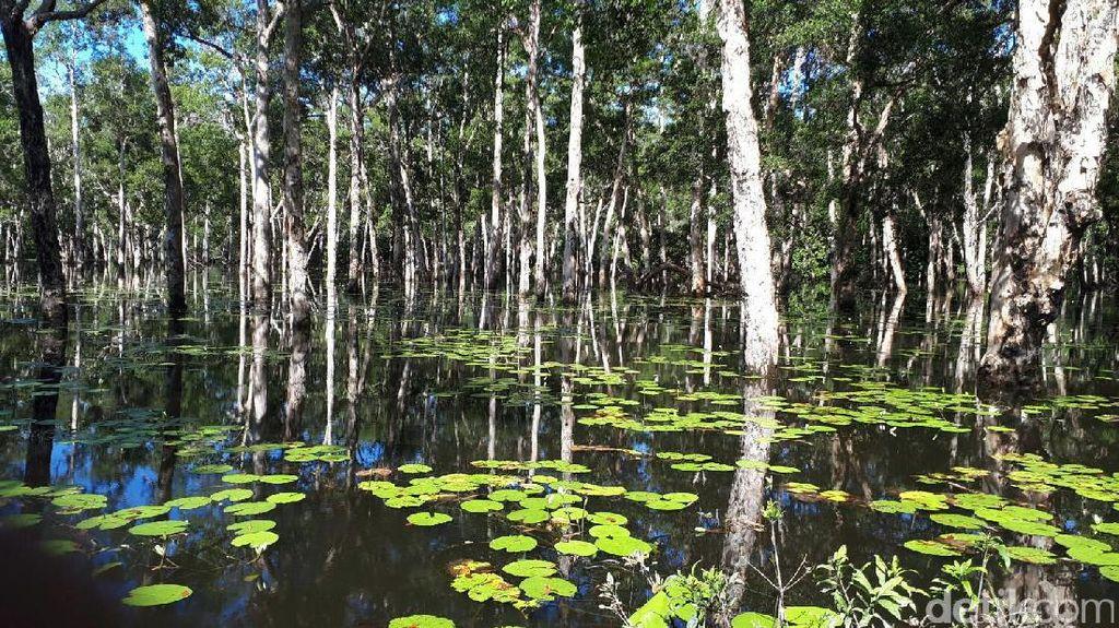 Foto: Inikah Sungai Amazon Ala Papua?
