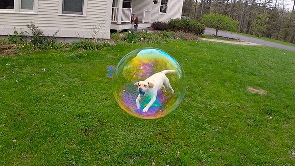Si anjing seolah terperangkap di dalam gelembung udara. Foto: LifeBuzz