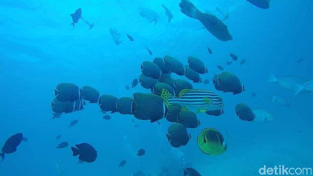 Masuk Pulau Terindah Sedunia, Sabang Targetkan 1,2 Juta Wisatawan