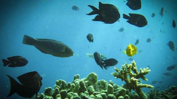 Wisata bawah air di Labuan Bajo.