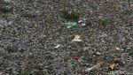 Foto: Horor Sampah Sungai Citarum