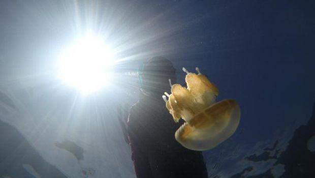 Ubur-ubur di Kakaban