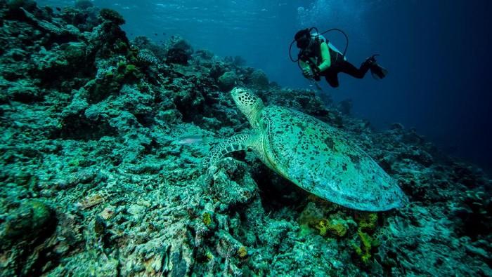 Bawah laut Indonesia