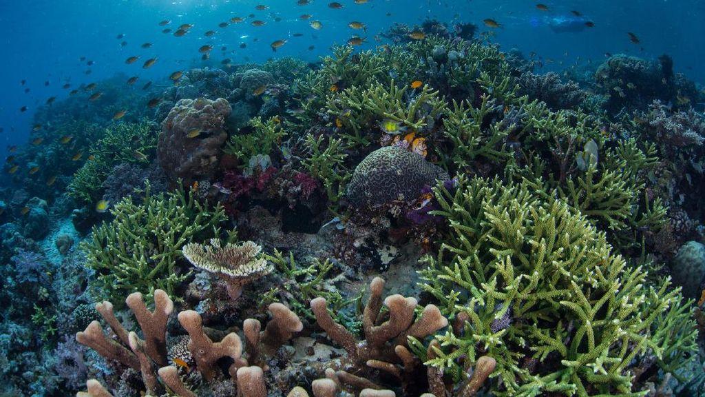 Indonesia Siapkan Rp 7,5 T untuk Lestarikan Laut