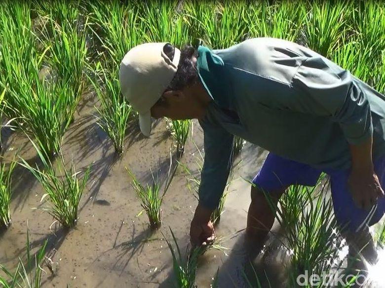 Desa Dan Industrialisasi Pertanian