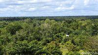Bukit Soeharto Cocok Jadi Lokasi Ibu Kota Baru