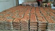 Harga Telur Ayam di Ambon Naik karena Kontainer Tertahan di Laut