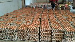 Harga Telur Ayam Hancur, Peternak Rugi Rp 3 Juta/Hari
