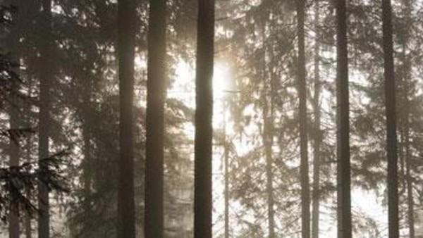 Black Forest di Jerman menginspirasi cerita-cerita sosok mitologi peri, kurcaci, penyihir, dan manusia srigala. Hutan ini lebat, sulit dimasuki cahaya matahari dan suasananya cukup menyeramkan (Guido de Kleijn)
