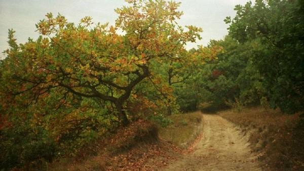 Hutan Hoia-Baciu di Rumania ini konon memiliki gerbang menuju dunia lain. Kawasan ini tempat yang paling misterius dan berhantu. Masyarakat juga percaya siapapun yang masuk ke dalam hutan lebih jauh, tidak akan pernah kembali selamanya (Mihaita Nagi/BBC)