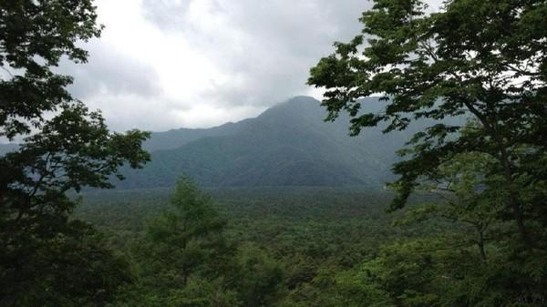 Hutan Aokigahara di Jepang ini berada di kaki Gunung Fuji. Tidak ada sinyal, dan kompas tidak akan berfungsi di hutan ini. Serta gunung ini juga tereknal sebagai tempat bunuh diri. Sudah lebih 500 orang yang melakukan bunuh diri di hutan ini. Seram! (Kujinen/BBC)