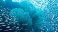 Makhluk Ini Bangun Setelah Terkubur 100 Juta Tahun di Dasar Laut