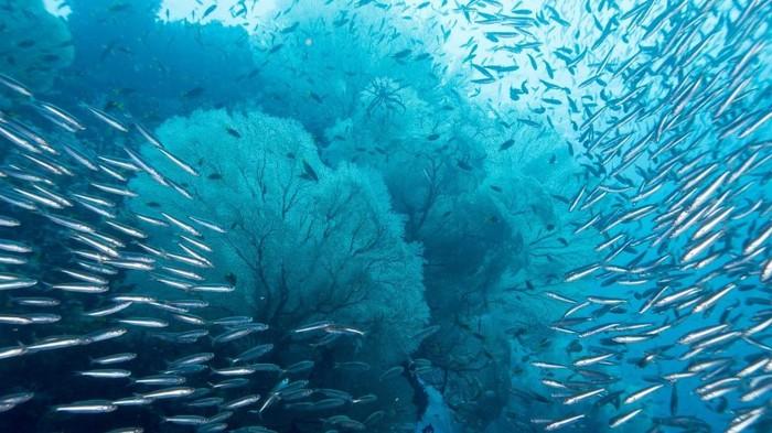 Tempat menyelam terbaik di asia