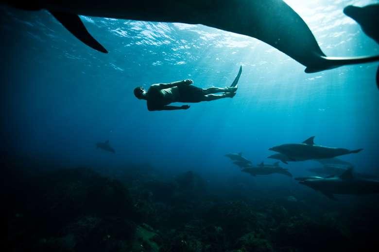 Guillaume mencintai aktivitas menyelam sejak kecil. Ini adalah potret saat dirinya menyelam di Mikura Jima, Jepang, dikelilingi oleh lumba-lumba. (Foto: www.guillaumenery.fr)