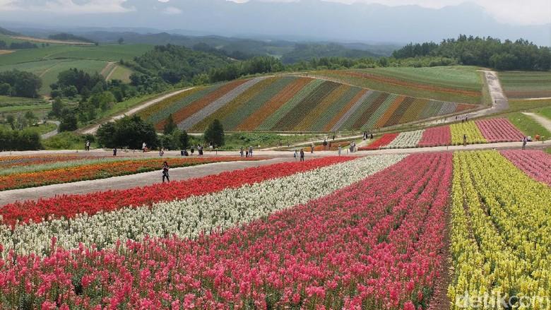 Kebun bunga pelangi di Hokkaido (Baban Gandapurnama/detikTravel)