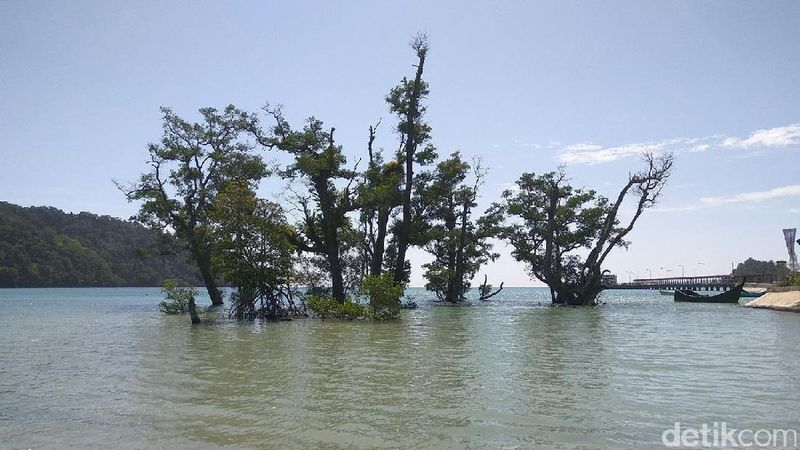 Pepohonan di tengah laut yang bisa dijumpai dalam perjalanan menuju Pulo Aceh. Foto-foto di sini pasti keren! (Agus/detikTravel)