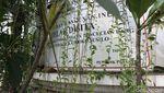 Foto: Plang Disita KPK Tertutup Kamboja di Rumah Besar Irjen Djoko