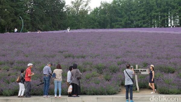 Tak ayal, kebun lavender ini pun jadi lokasi favorit traveler buat foto-foto. Berbagai sisinya tampak fotogenik (Baban/detikTravel)