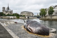 Bangkai Paus Raksasa Bikin Geger Paris, Ternyata Ini Faktanya