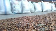 Ke Jatim, Mentan Minta Produksi Kakao Terus Digenjot
