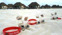 Ini Dia Oleh-oleh Maldives... Bukan Pakaian, Bukan Juga Makanan