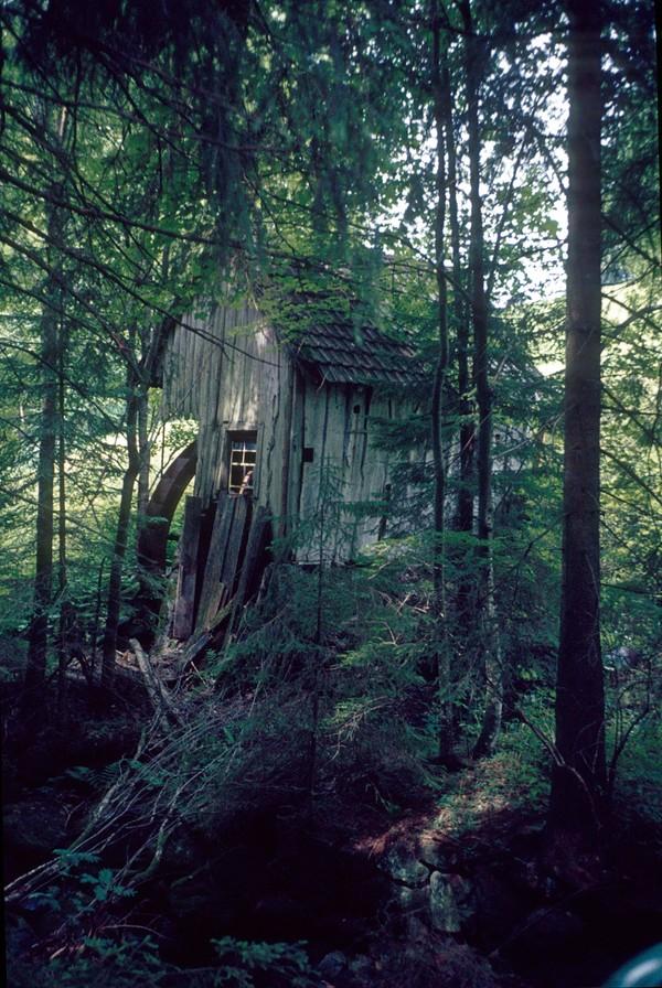 Setelah itu, black forest menjadi benar-benar gelap sampai pukul 08.00 pagi waktu setempat. (Thinkstock)