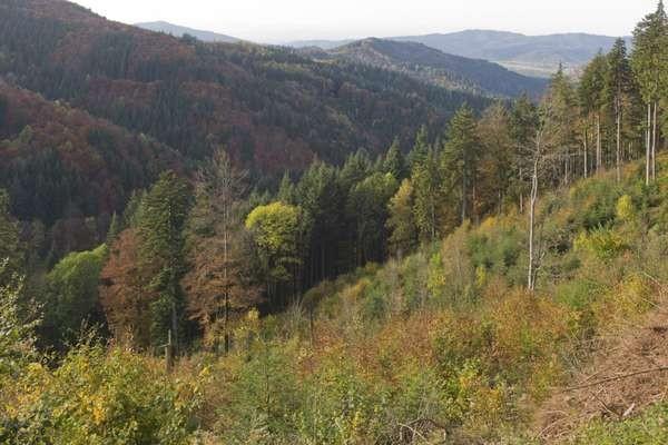 Black forest makin terkenal menyeramkan oleh Grimm bersaudara, kakak-beradik Jakob dan Wilhelm Carl Grimm asal Jerman yang merupakan para novelis dan pembuat cerita dongeng di abad ke-17 hingga 18.(Thinkstock)
